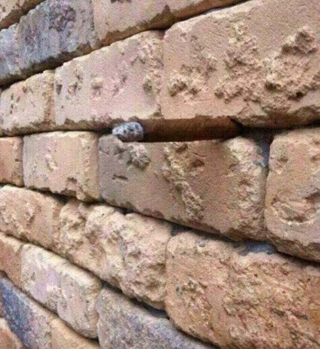 Vous voyez quelque chose de bizarre entre les briques ?