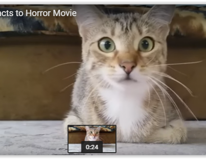 VIDEO: un chat prend peur devant un film d'horreur !