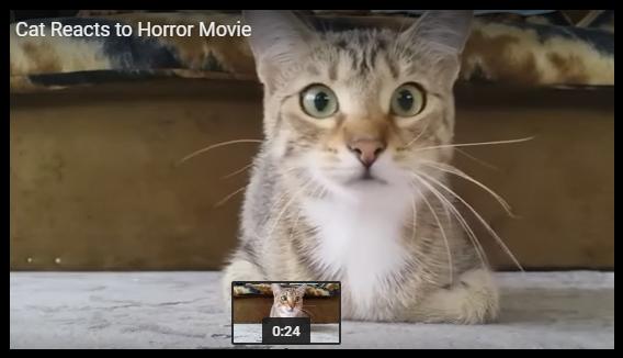 VIDEO: un chat prend peur devant un film d'horreur !