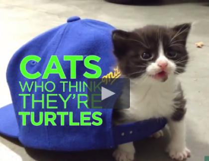 Une vidéo de chats qui se prennent pour des tortues !