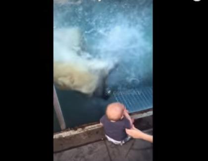 VIDEO – Un ours polaire essaie de manger un enfant dans un zoo !