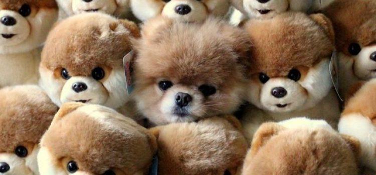 JEU – Voyez-vous l'animal qui se cache dans cette image ?