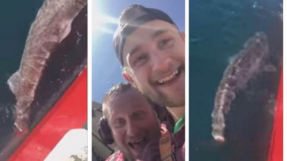 Ils coupent la queue d'un requin avant de le relâcher (video)